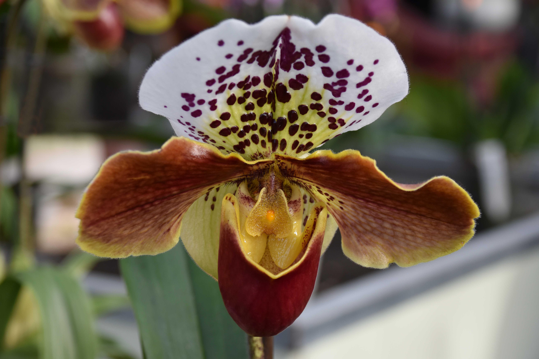 12 Orchideen.jpg